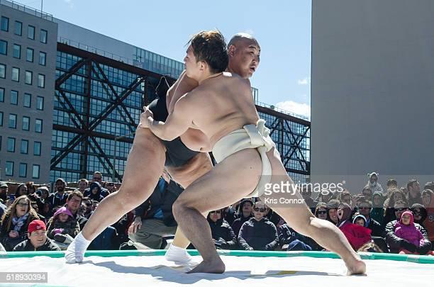 Takeshi Amitani and Byambajav Ulambayar wrestle during SumoSized Sunday on April 3 2016 at the Atlantic Plumbing Condos in Washington DC