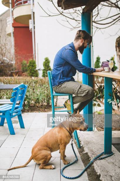 taking a break from walking the dog - american staffordshire terrier stock photos and pictures