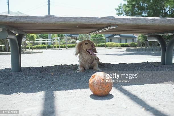 taking a break in the shade - peter lourenco stockfoto's en -beelden
