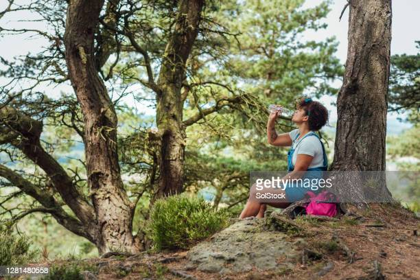 taking a break - woodland stock pictures, royalty-free photos & images