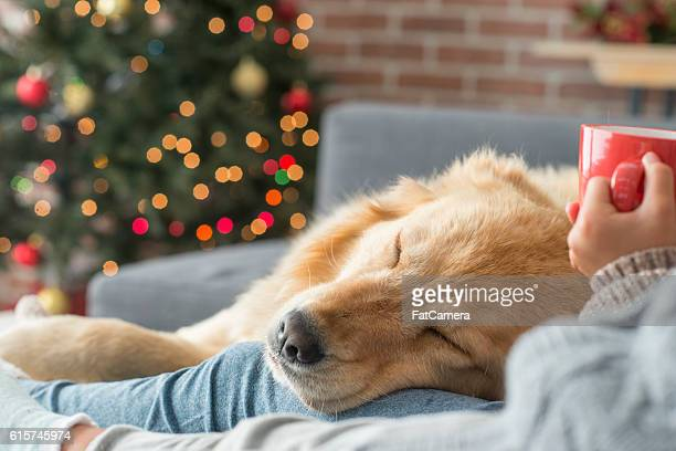 taking a nap - christmas dog stock pictures, royalty-free photos & images