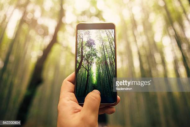 taking a photo of bamboo forest - photo messaging stock pictures, royalty-free photos & images