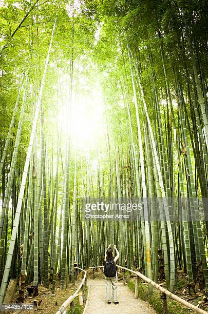 Taking a Photo of Bamboo Forest