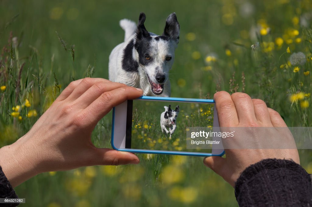 Taking a picture : Stock Photo