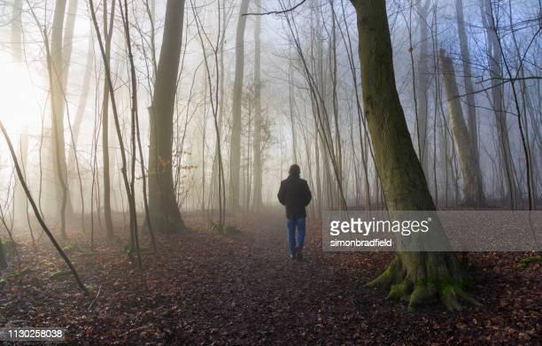 森の中で散歩 - アマシャム ストックフォトと画像