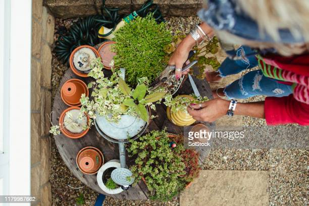 taking care of her plants - showus stock pictures, royalty-free photos & images