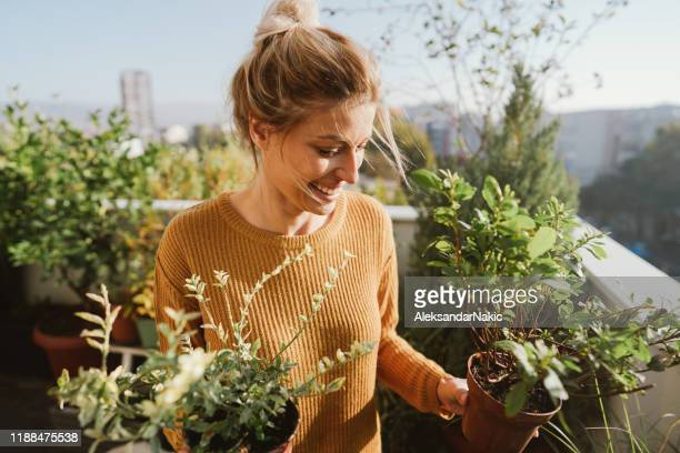 taking care of my plants - gardening stock pictures, royalty-free photos & images
