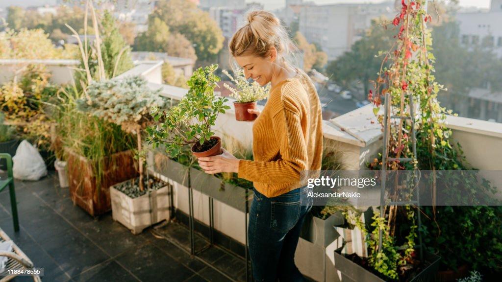 Prendersi cura delle mie piante : Foto stock