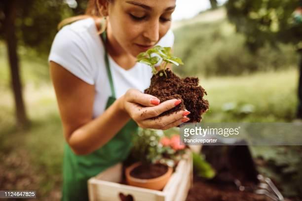 het verzorgen van de plant - biologisch stockfoto's en -beelden