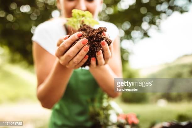 cuidando da planta - primavera estação do ano - fotografias e filmes do acervo