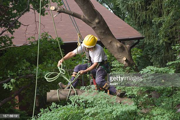 taking down the cherry tree - absence stock pictures, royalty-free photos & images