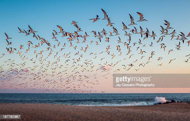taking flight - cape may stock pictures, royalty-free photos & images