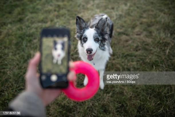 taking picture of a dog with smartphone for social media,poland - mensagem com foto imagens e fotografias de stock
