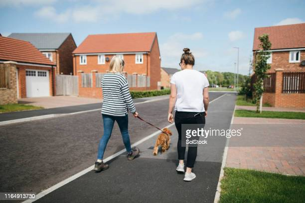 taking the dog for a walk - residential district stock pictures, royalty-free photos & images