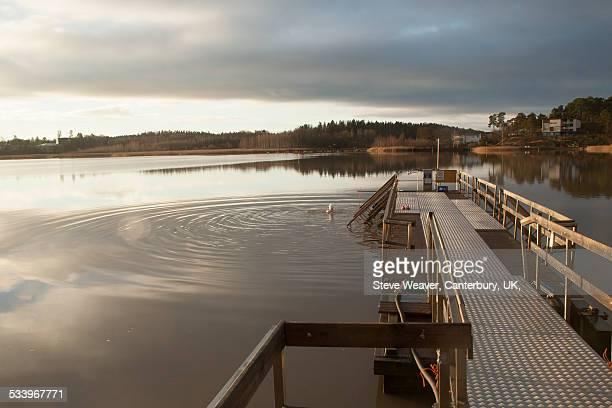 taking winters swim, turku, finland - トゥルク ストックフォトと画像