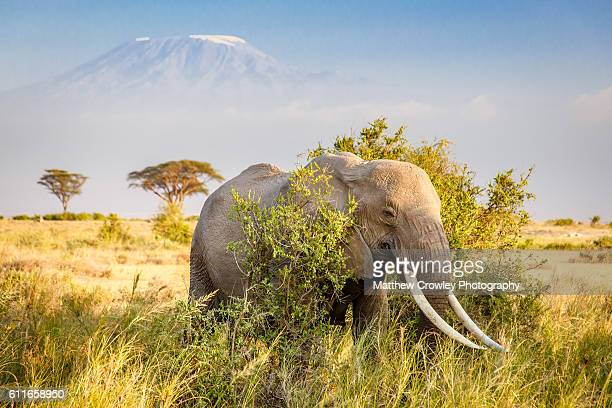 tale of two giants - nairobi stock pictures, royalty-free photos & images