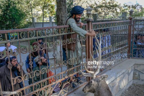 Taliban fighter touches a deer in its enclosure at the Kabul Zoo on September 17, 2021.