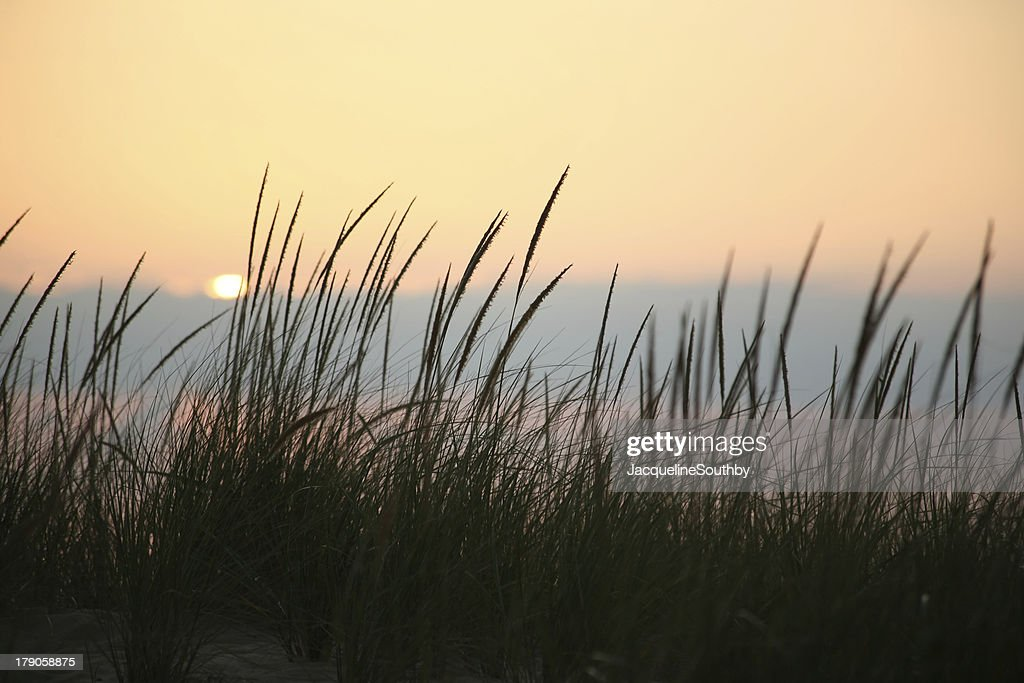tall grass silhouette. Tall Beach Grass Silhouette O