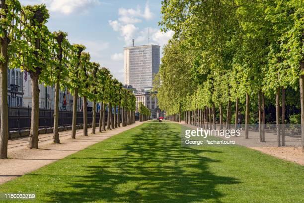 tall building at the end of row of trees in urban park - brussels hoofdstedelijk gewest stockfoto's en -beelden