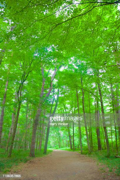 tall deciduous trees on either side of footpath in litchfield, ct - barry wood stock pictures, royalty-free photos & images