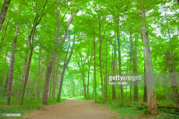 tall deciduous trees on either side of footpath - barry wood stock pictures, royalty-free photos & images