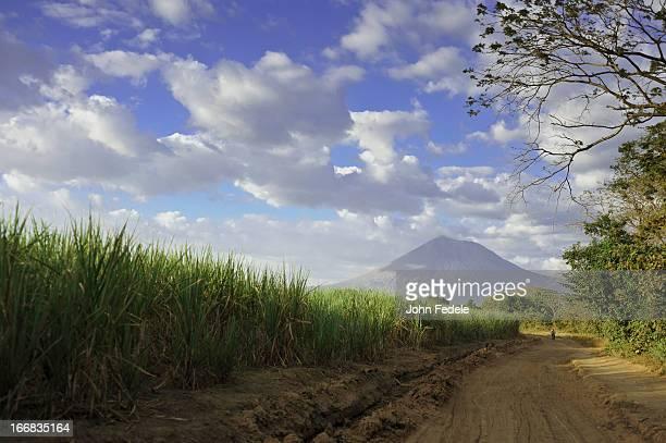 tall grass along rural dirt road - nicaragua fotografías e imágenes de stock