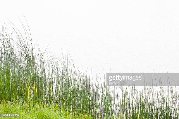 Tall Grass at Water's Edge