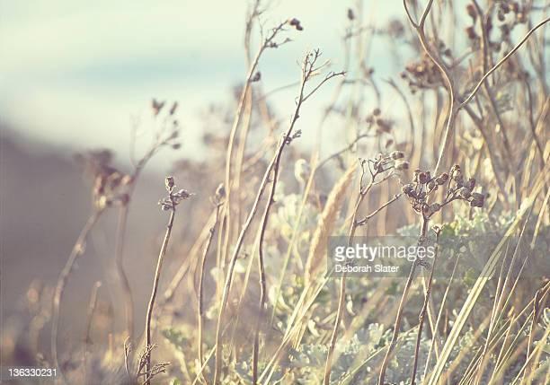 Tall grass by sea