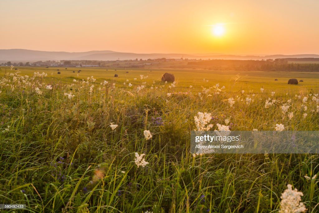 grass field sunset. Photo ID 580492433 Grass Field Sunset