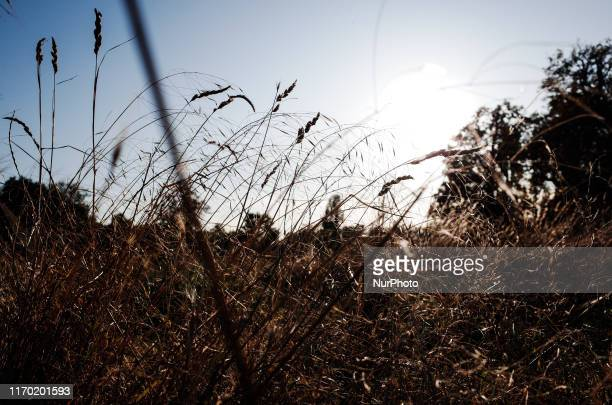 Tall grass grows in Kensington Gardens in London England on September 21 2019 Saturday marked the fifth straight day of warm sunny weather in London...