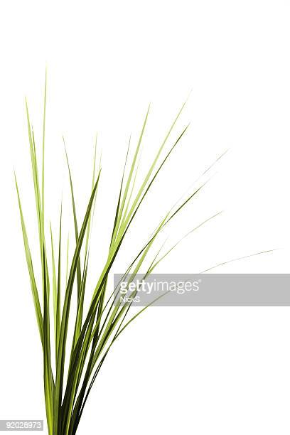 tall grass - blade of grass stock pictures, royalty-free photos & images