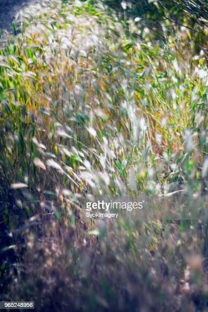 Tall grass, selective focus