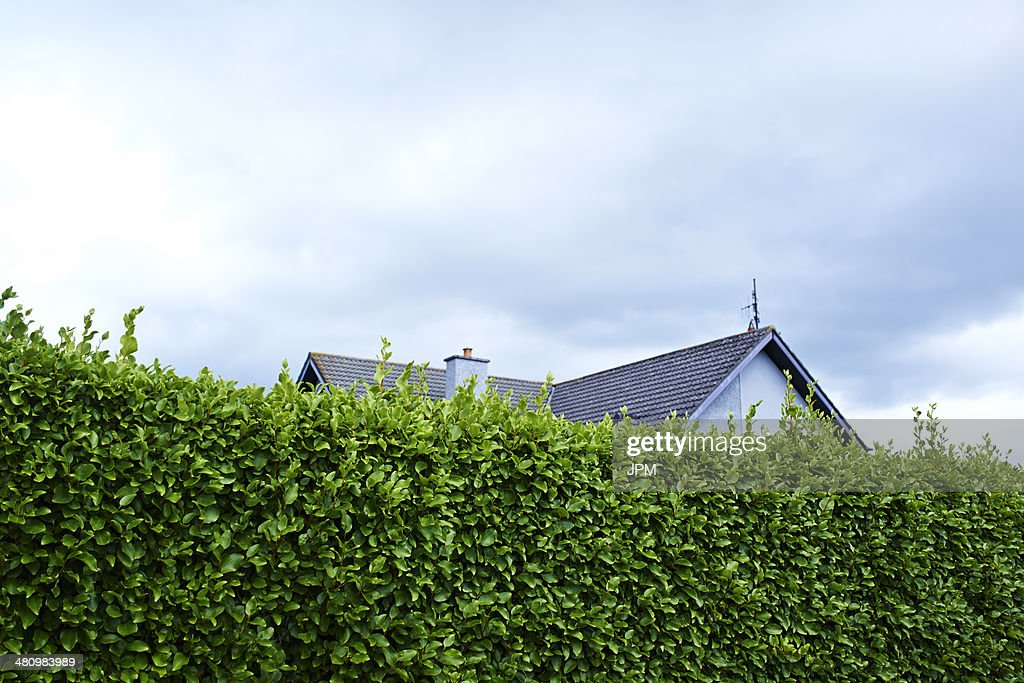 Tall green boundary hedge with house behind : Stock-Foto
