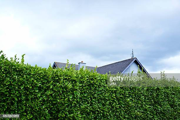 tall green boundary hedge with house behind - hedge stock pictures, royalty-free photos & images