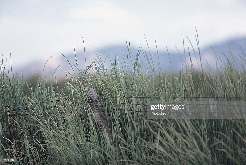 tall green grass rises behind a barbed wire fence as mountains rise in the background under a white clouded sky : Foto de stock