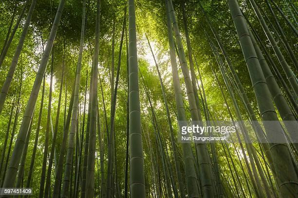 tall & green - nun stock-fotos und bilder