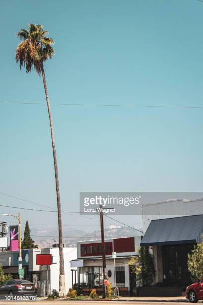 tall palm tree on california street - hollywood california stock pictures, royalty-free photos & images