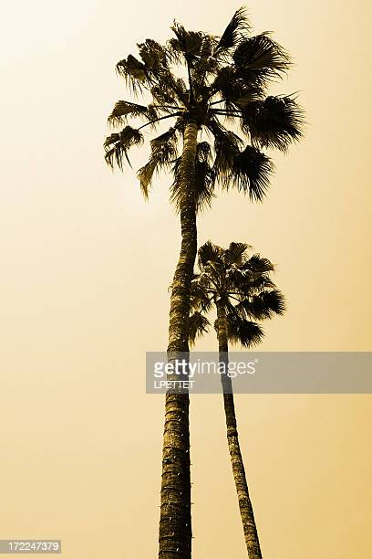 tall palm trees in beverly hills los angeles - beverly hills stock pictures, royalty-free photos & images