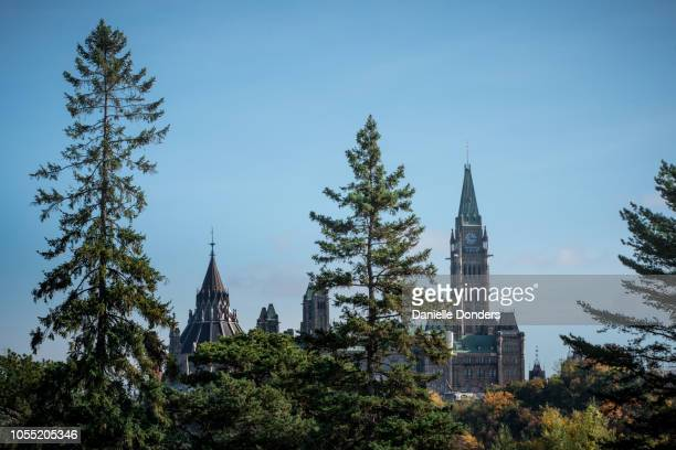 Tall pines in front of the Parliament Buildings and Peace Tower