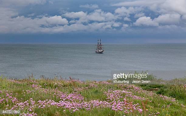 tall ship and wildflowers - s0ulsurfing stock pictures, royalty-free photos & images