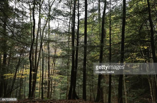 Tall trees in on the woodland trail, Dillon Wildlife Area Nashport, Ohio, USA