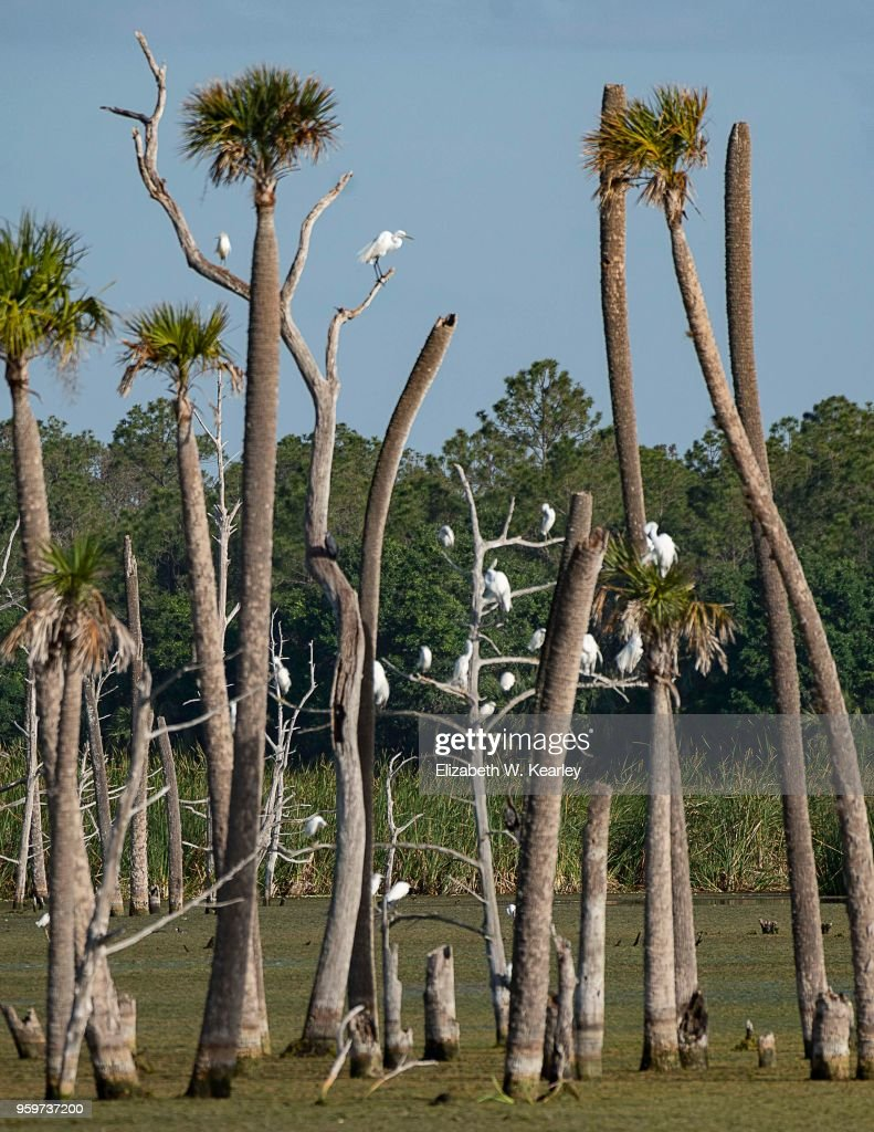Tall Trees with Many Perched Birds : Stock-Foto