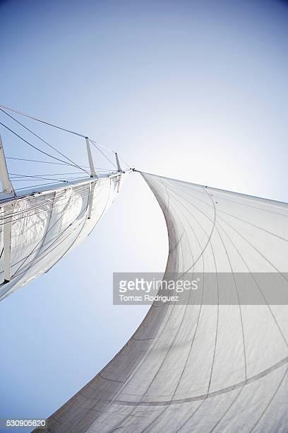 Tall white sails