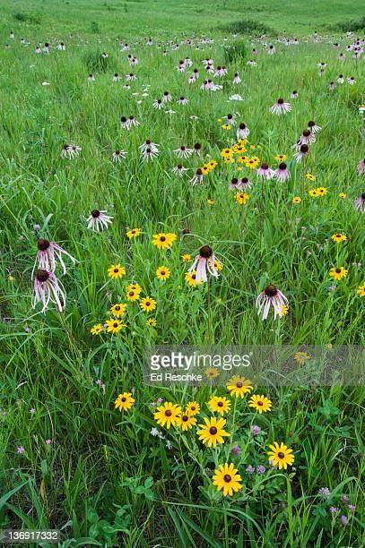 Tallgrass Prairie, Nature Conservancy Preserve