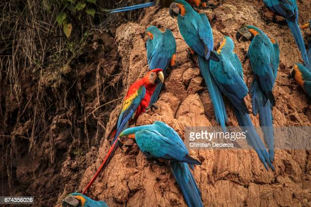 Tambopata National Reserve - Madre de Dios - Peru