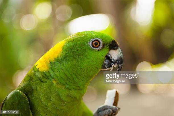 tambor, boat trip to the tortuga island, parrot - papagayo guanacaste fotografías e imágenes de stock