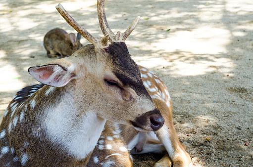 Tame deer animal walking around freely 1216529935