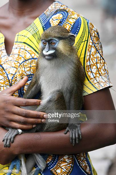 Tamed monkey, Congo.