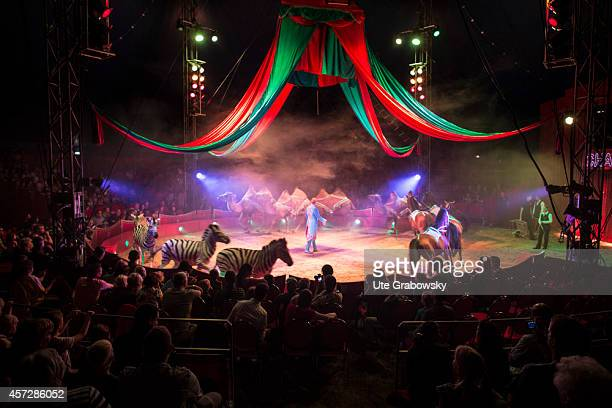 Tamed zebras camels and horses performing tricks in a circus ring during a circus performance on June 15 in Bonn Germany The use of animals for...