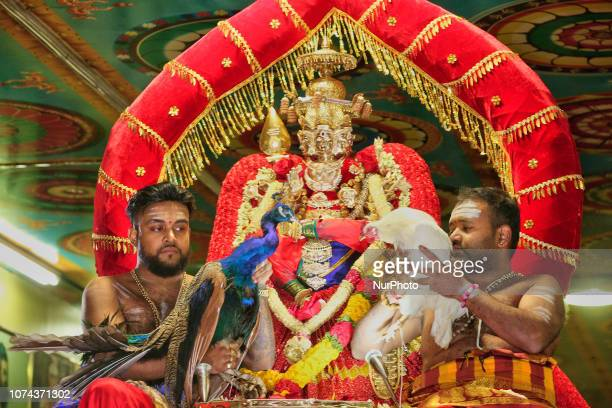 Tamil Hindu priests hold a rooster and a peacock while sitting beside the idol of Lord Murugan while reenacting the epic battle between Soorapathman...